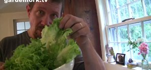 Make a bacon and poached egg salad lyonnaise