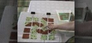 Sew a Snail's Trail quilt block