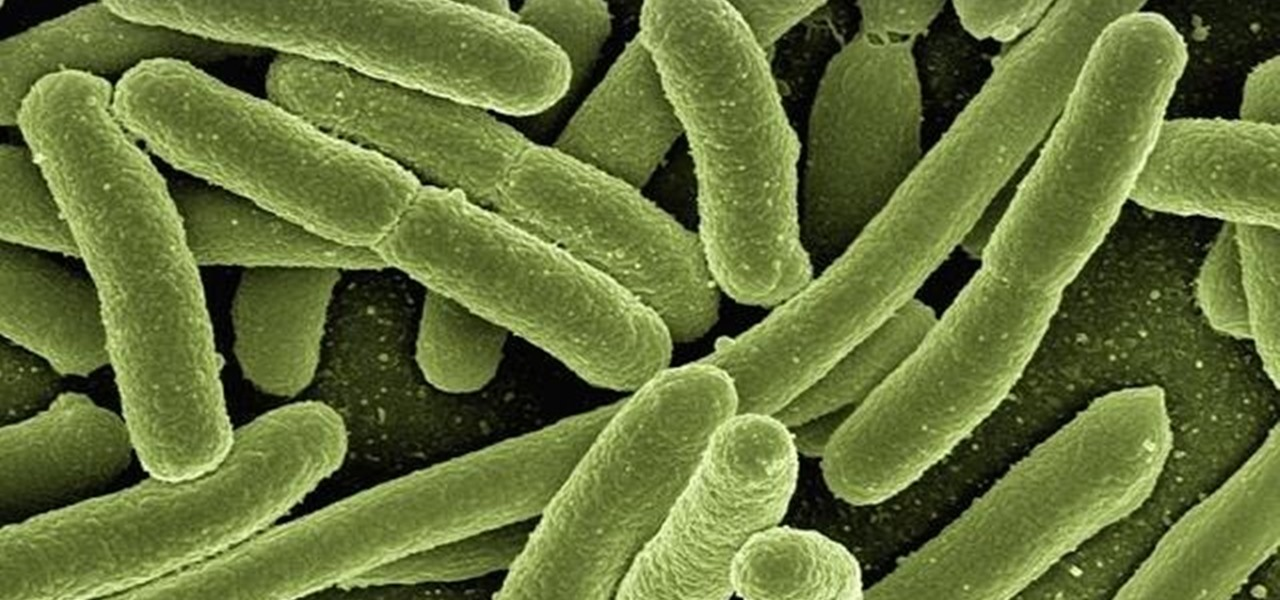 Gut Bacteria Can Affect Your Weight