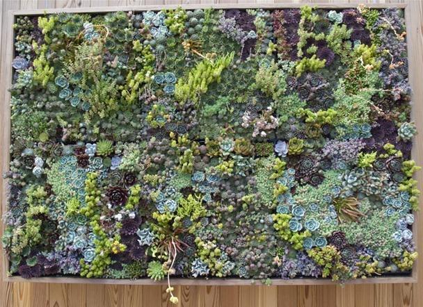 The Gallery For Diy Vertical Garden Frame