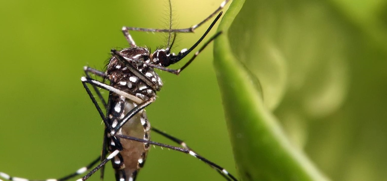 Florida & Texas Could Become Zika Hotspots in the US