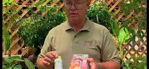 Propagate your favorite houseplants