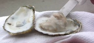 Shuck a fresh oyster with an oyster knife