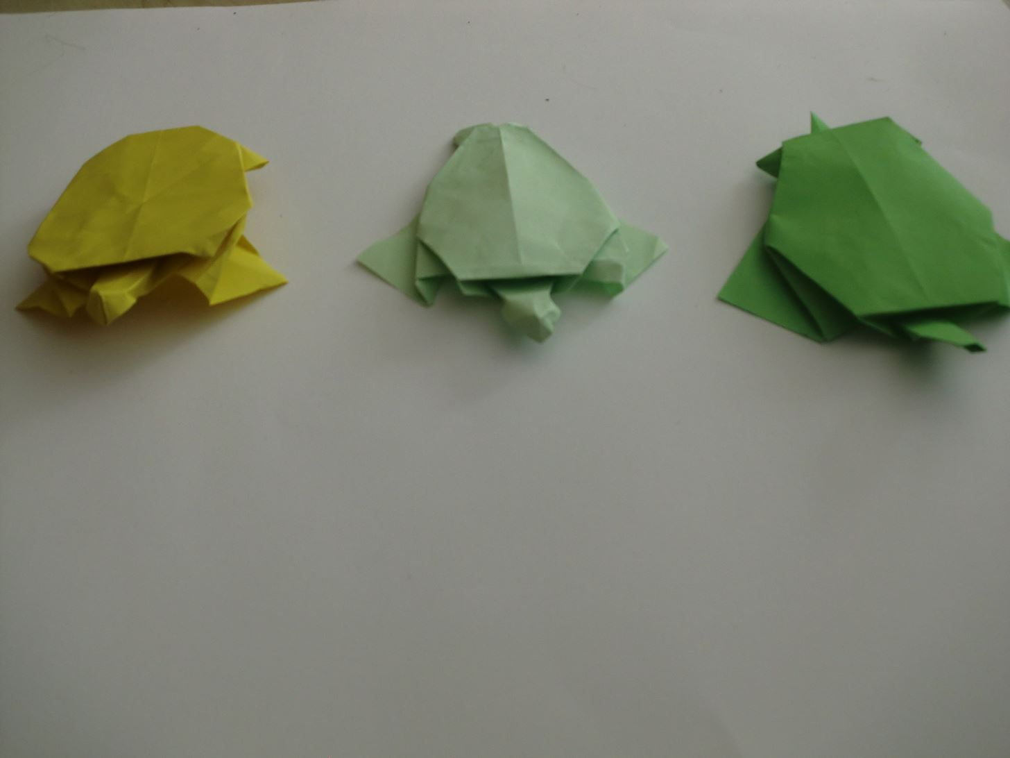 Fresh Folds:  Turtle Evolution