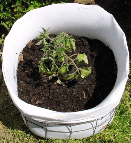 how to make your own tomato planter