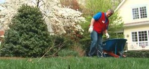 Have healthier, greener grass with basic lawn maintenance tips from Lowe's