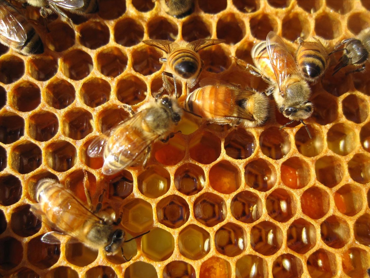Nature's Food Hacks: How Honey's Magical Qualities Make It Indispensable