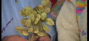 Make dried flower arrangements