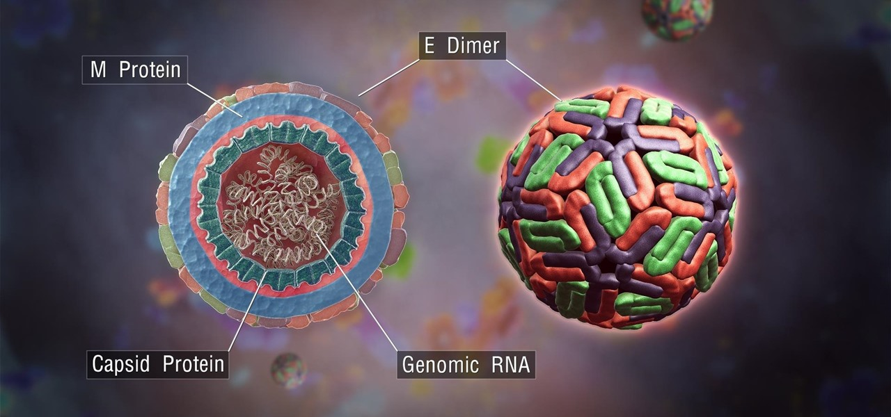 First Full Genome Analysis Solves the Mystery of How Zika Got So Dangerous