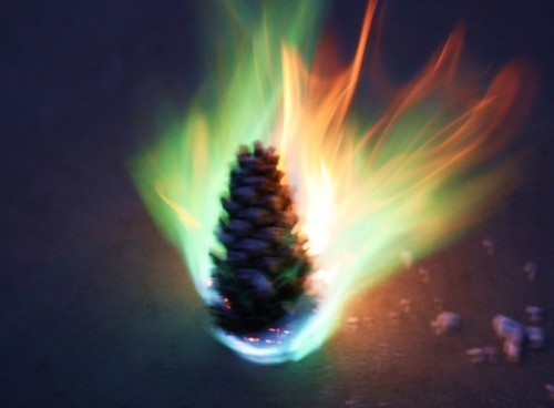 Holiday HowTo: Colored Flaming Pine Cones