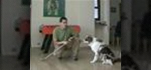 Acquaint your dog with your crutches