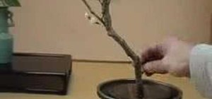 Do authentic Japanese ikebana with a cherry branch