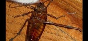 Kill a cockroach kindly