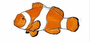 Draw a simple and colorful clownfish (pez payaso)