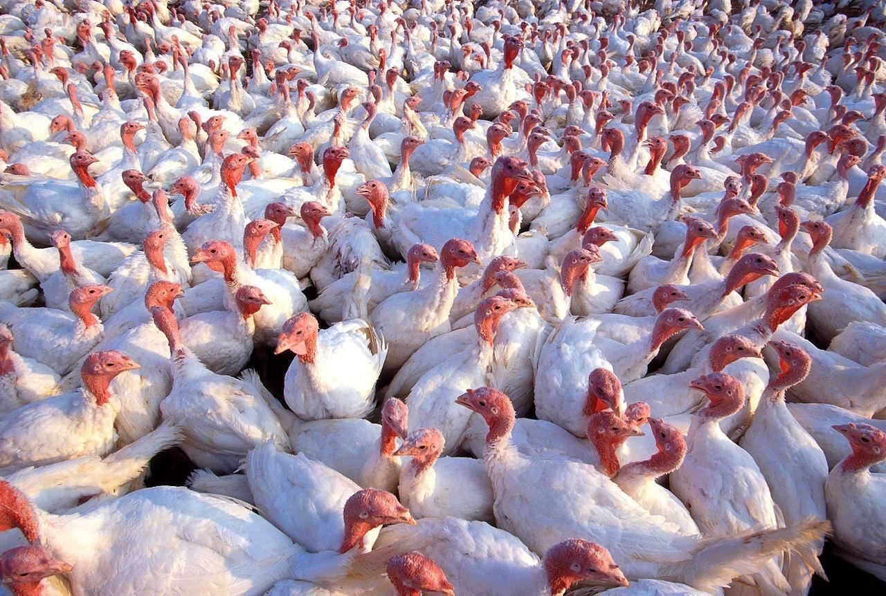Sixth Outbreak of Avian Flu Confirmed in China