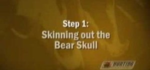 Clean a bear skull and make a European mount