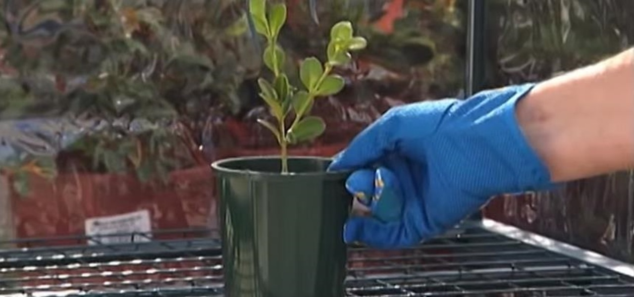 Propagate Plants from Cuttings