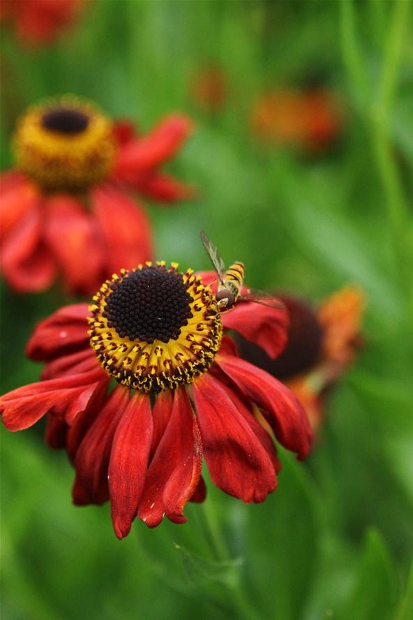 Vibrant Color Photography Challenge: Landing on a Flower