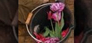 Pick tulips