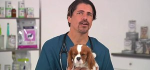 Diagnose and treat canine influenza (CIV) in dogs