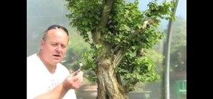 Power carve a bonsai