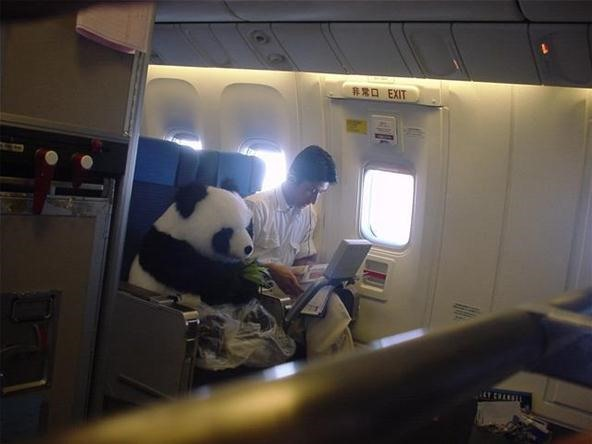 WTFoto of the Day: Out-of-Place Panda!
