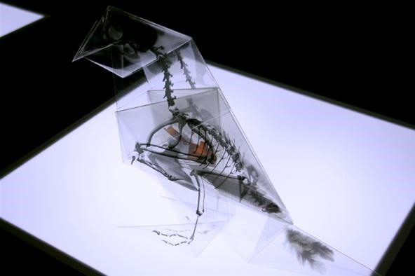 Origami X-Ray Skeletons of Endangered Animals