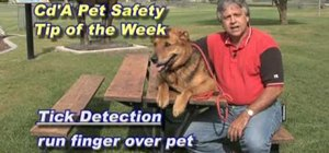Detect and treat ticks on dogs
