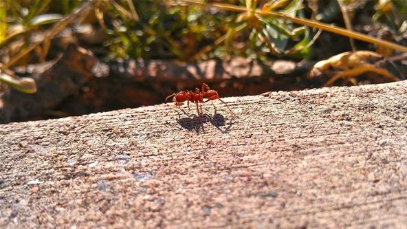 Bokeh Photography Challenge: The Micro Ant