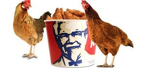 Replicate Colonel Sanders' Kentucky Fried Chicken Secret Recipe