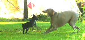 Prevent ticks from spreading disease in dogs and cats
