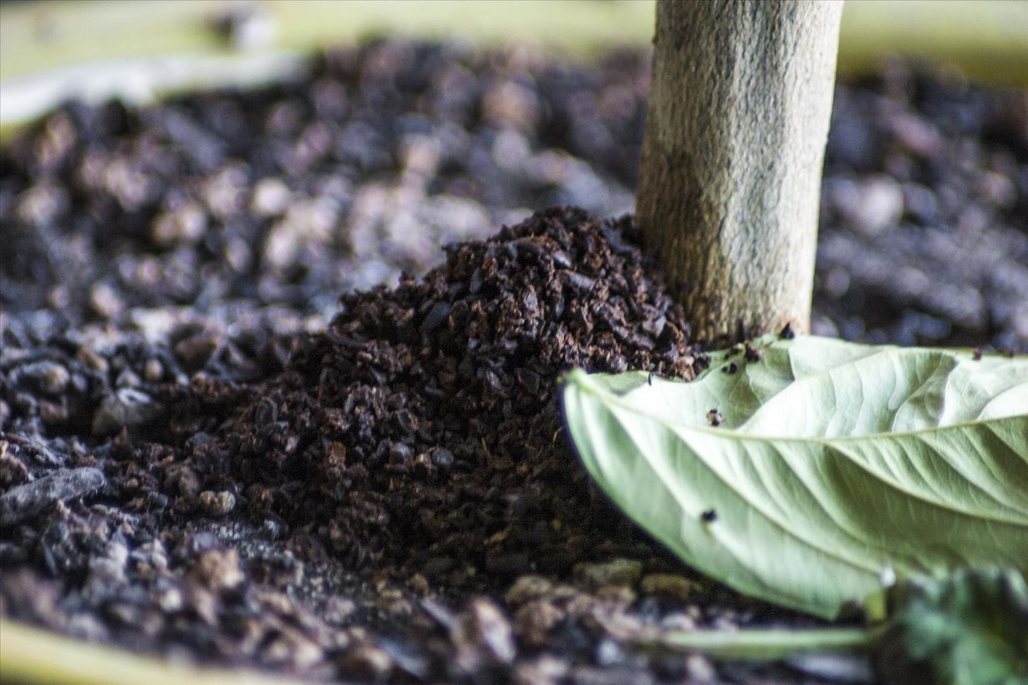 5 Reasons Why You Should Never Throw Out Used Coffee Grounds
