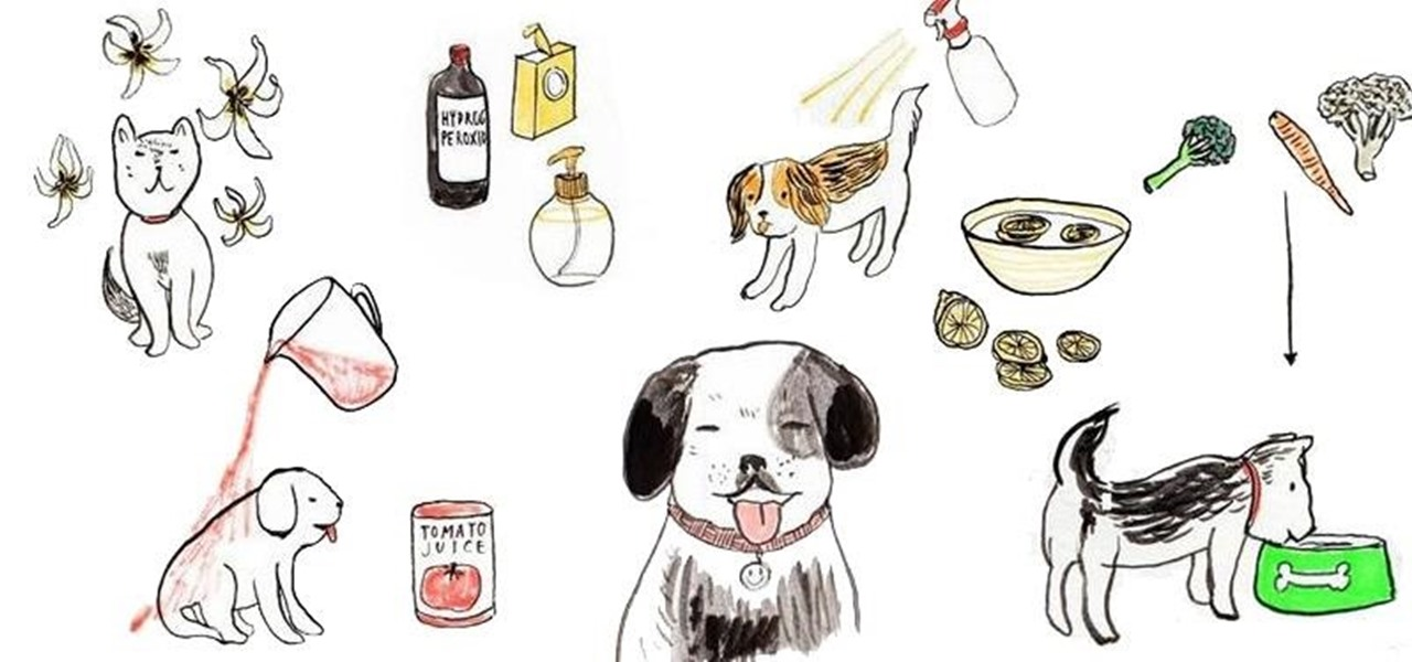 Treating Halitosis In Dogs