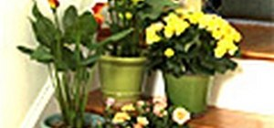 Go green and eco-friendly with indoor house plants