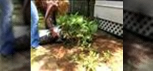 Add mulch to your garden