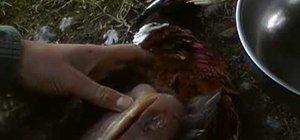 Skin a pheasant for cooking