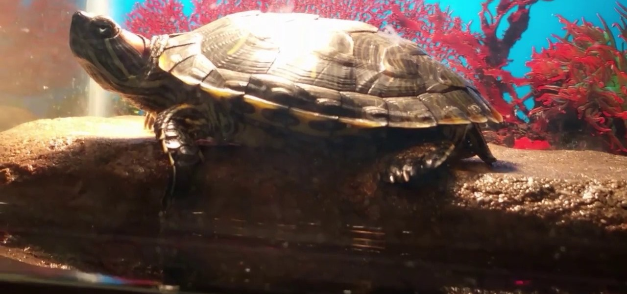 Diy Cheap Turtle Dock Great For Heavy Turtles A Kiyia