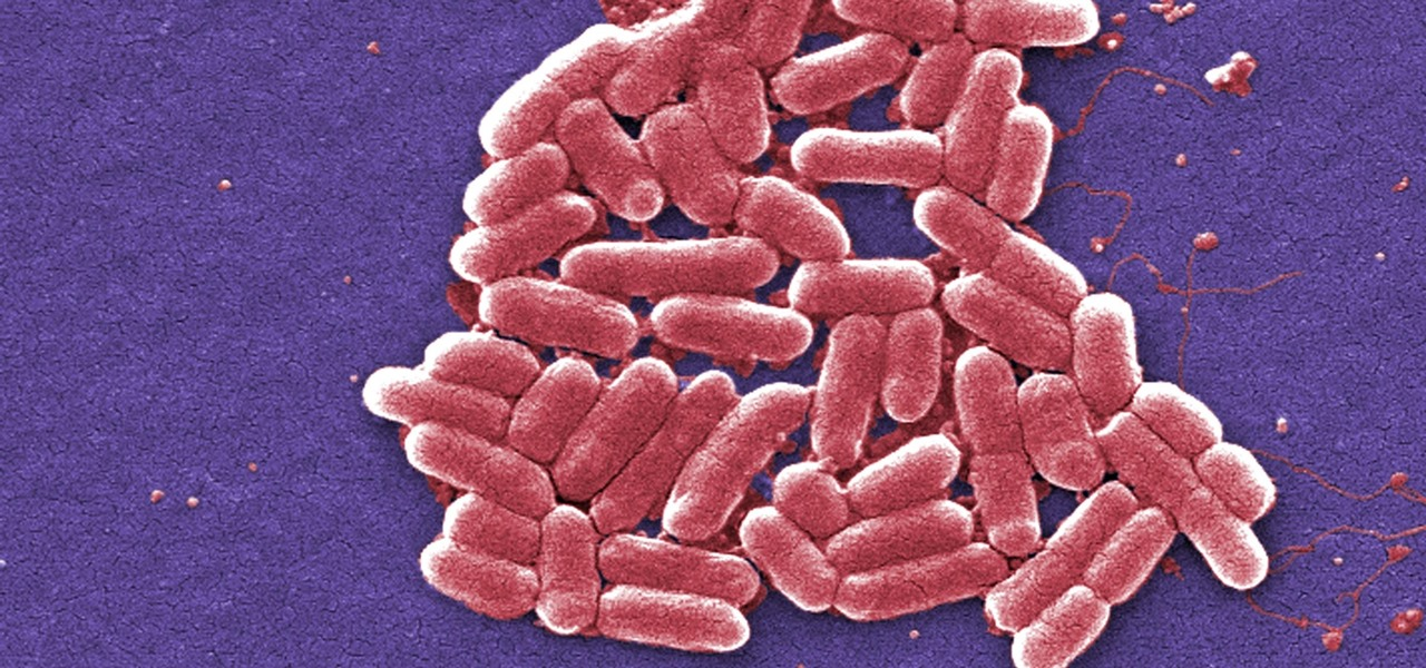 New Approach Could Be Silver Bullet Against Antibiotic Resistant E. Coli & Other Gram-Negative Bacteria