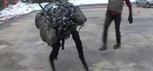 Robot dog prepares for world domination