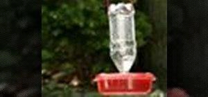 Make a hummingbird feeder