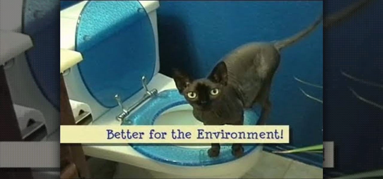 how to potty train your cat essay