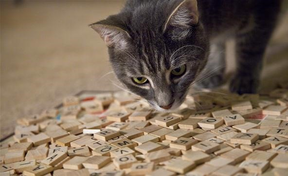 Scrabble Cats Go Head to Head