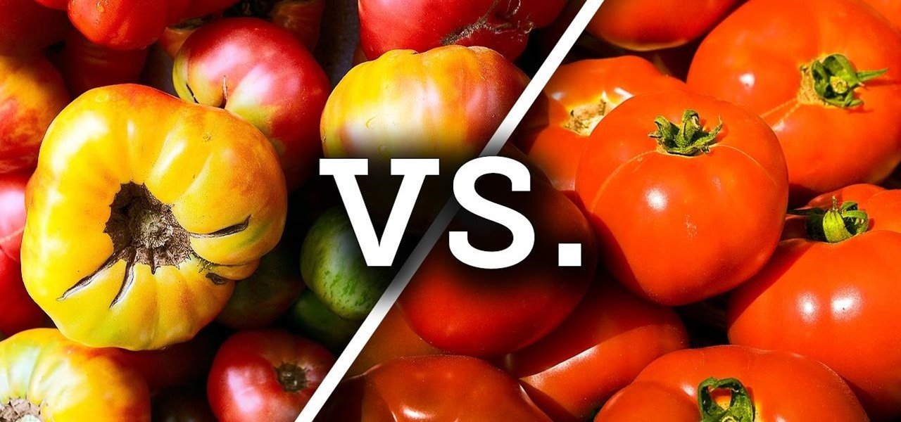 Heirloom vs. Hybrid Tomatoes… Ready, Fight!