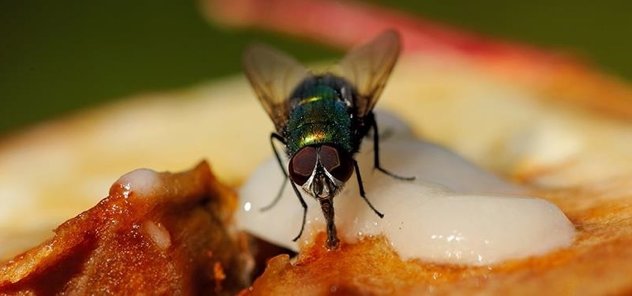 frozen fruit how to get rid of fruit flies