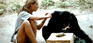 Jane Goodall Was a Babe (and One of History's Greatest Conservationists)