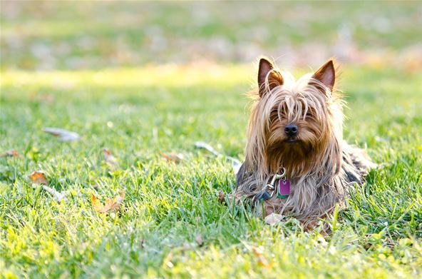 Pet Portrait Challenge: Chewy!