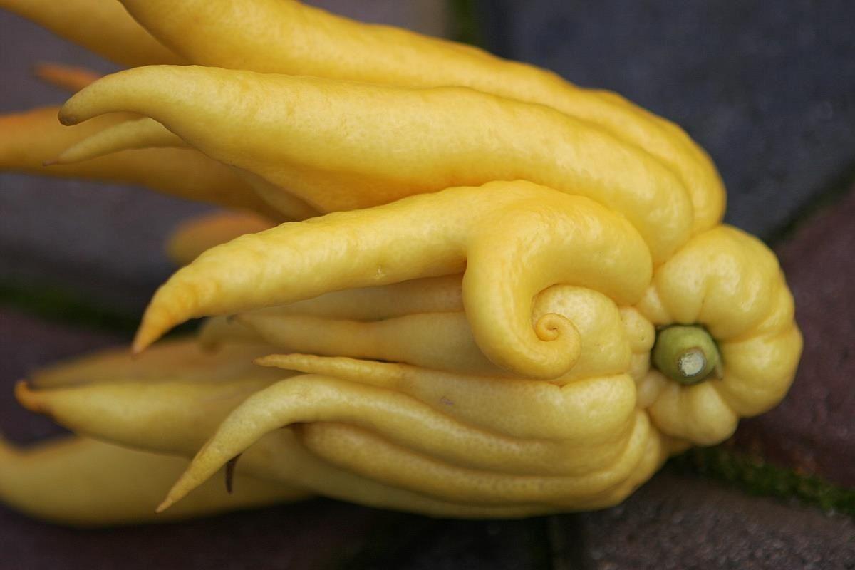 Weird Ingredient Wednesday: Get Enlightened with a Buddha's Hand Citron