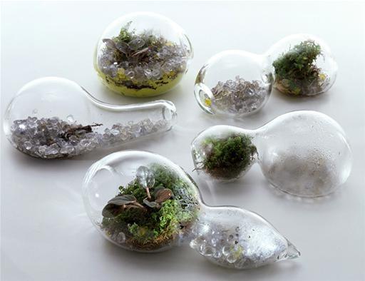 Garden-in-a-Jar