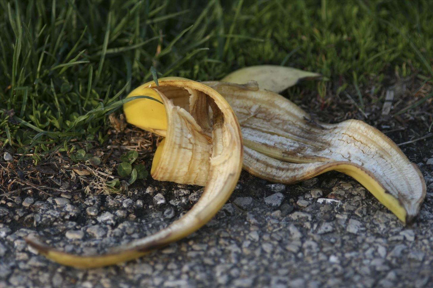How To Get Rid Of Slugs In The Garden How To Get Rid Of