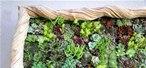 DIY Vertical Garden Lives and Breathes